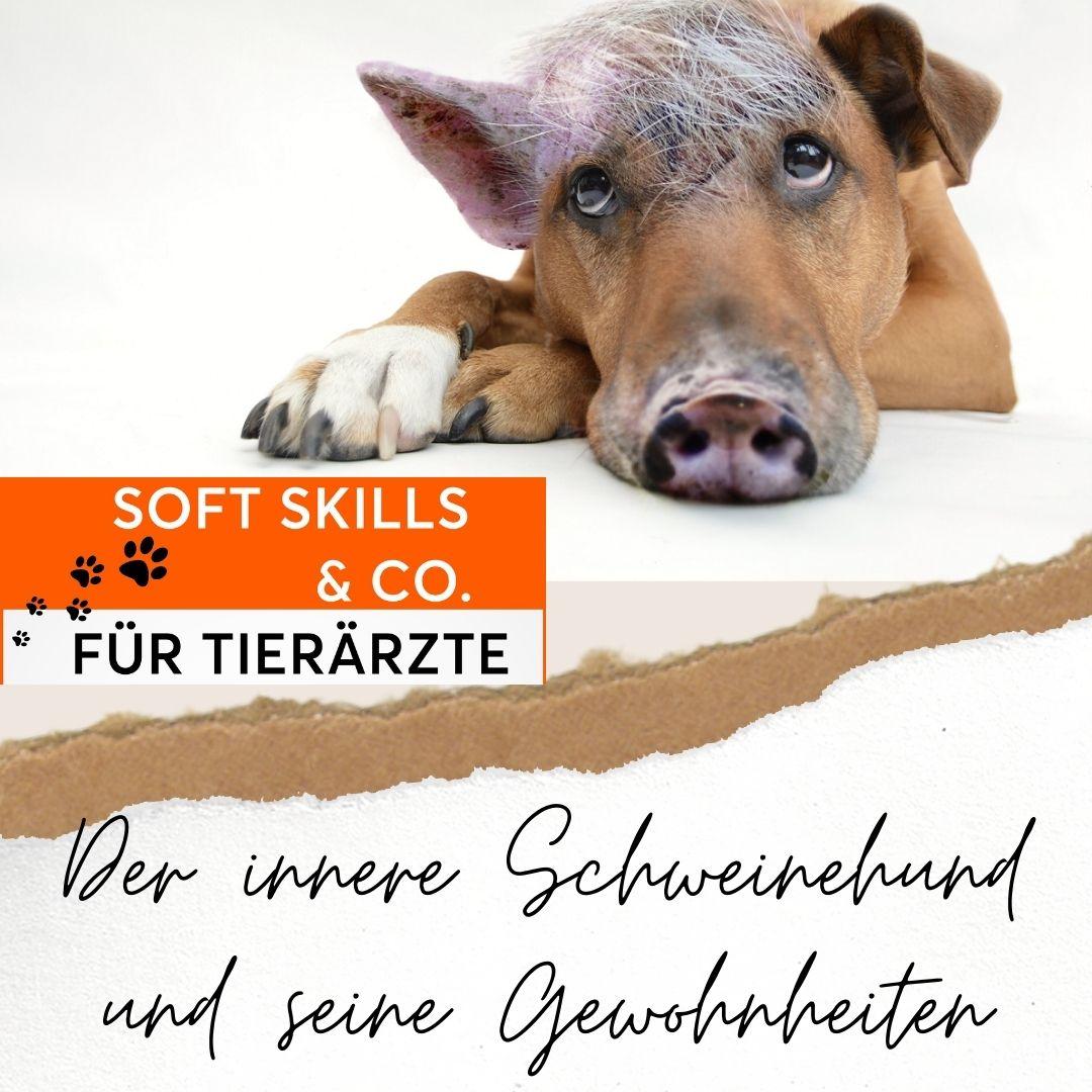 Soft Skills & Co für Tierärzte
